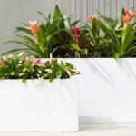 Cum să plantați flori în jardiniere mari de grădină